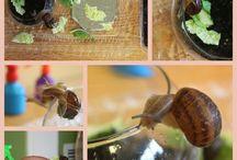 Science- snails