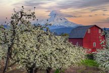 Orchard Pictures / Photos of apple and pear orchards we like. / by Bull Run Cider