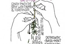 Herbs for Cooking & Healing