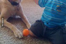 Hund ein toller Freund