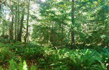 Denman Island Forests