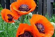 Gardening Spring Flowers / by Kelly Rita Birtch