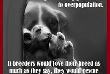 I Hate Dog Breeders / https://www.facebook.com/pages/I-Hate-Dog-Breeders/167747893303842