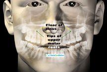 Dental Problems / Dental problems - causes,  symptoms, prevention and more.