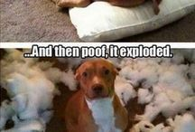 LOL: Funny Dogs