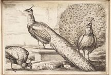 Peacocksgarden
