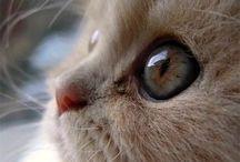 猫(*ΦωΦ*)