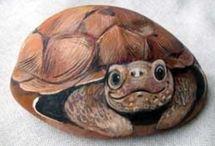 tortuga de pidra