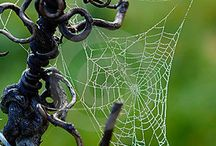 SpiderWeb Beauty