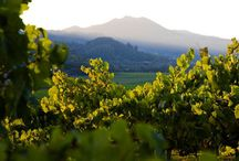 Grapes, vineyards & everything wine
