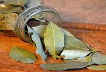 erbe aromatiche e non solo curative