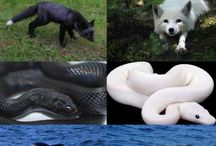 melan and albino animals