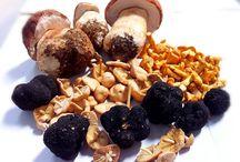 Fresh Mushrooms/ Setas Frescas
