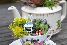 Teacup fairygarden