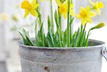 ღ✻Flowers and Gardens / ✿*゚'゚・✿ Flowers and Happy Moment in Garden ✿*゚'゚・✿ Pin free beautiful pics on this board...