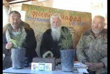 Алтайские мудрецы