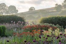 Traditional meadow garden