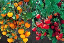 hanging vegtable garden