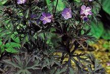 Rośliny Plants