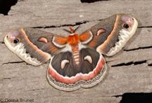 Missouri Butterflies & Moths / by Missouri Conservation