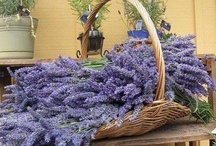 Cesta de flores / Passando rapidinho pra lhe deixar essa cesta de flores, um abraço e dizer que te amo!