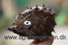 Efterårsideer fra min blog / Egne ideer fra min blog www.agnesingersen.dk  kids crafts attum, chestnut
