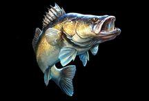 halas-kép