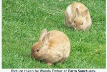 ANIMAL : Animal Facts / by Johana Ufa