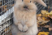 Bunny love / Cute images
