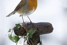 Oiseaux au jardin