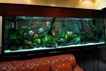 KJK akvárium