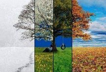 Seasons  / different seasons of the year