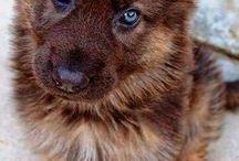 Cachorros/gatitos/animales kutes