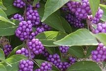 Peg's Favorite Plants / by Peg Prizer