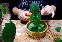 nettle and cinnamon treat diabetes naturally