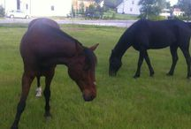 My animals ☺
