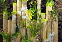 bambu loog