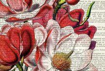 flores, plantas