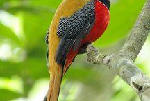 (Exotic) Birds