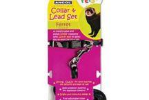Small Animal Harnesses & Collars