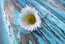 Summer & Flowers