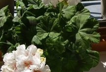 Buket potteplanter