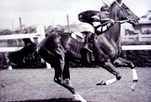 Incredible Sport Horses / Bighearted horses giving their all / by Birdie K
