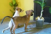 Cachorros, tudo de bom! / O melhor amigo que o ser humano pode ter! Cachorros e sua incrível capacidade de nos encantar!