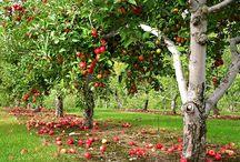 Growing food / by Crystal Jones