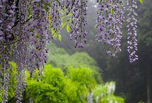 Pergola záhrada