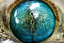 "Eyes""-"""