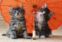 Just love cats:)