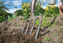 Photos from the Garden / Gardening photos and photo blogs