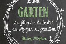 Schriften/ Bilder